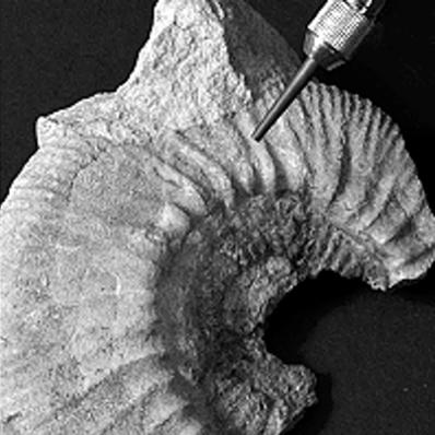 Restoration, Palaeontology